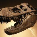 Heart's Uptown Dinosaur roams the North West